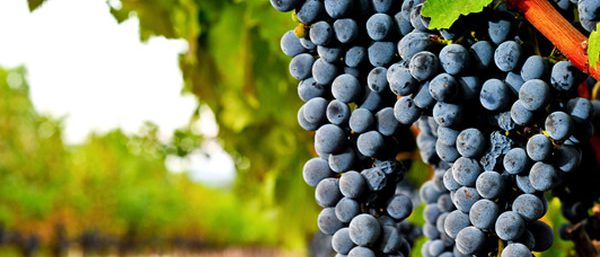 Wine Tours on Long Island - LI Wine Tastings