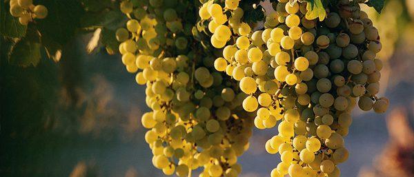 Wine Tours Long Island - LI Wine Tastings